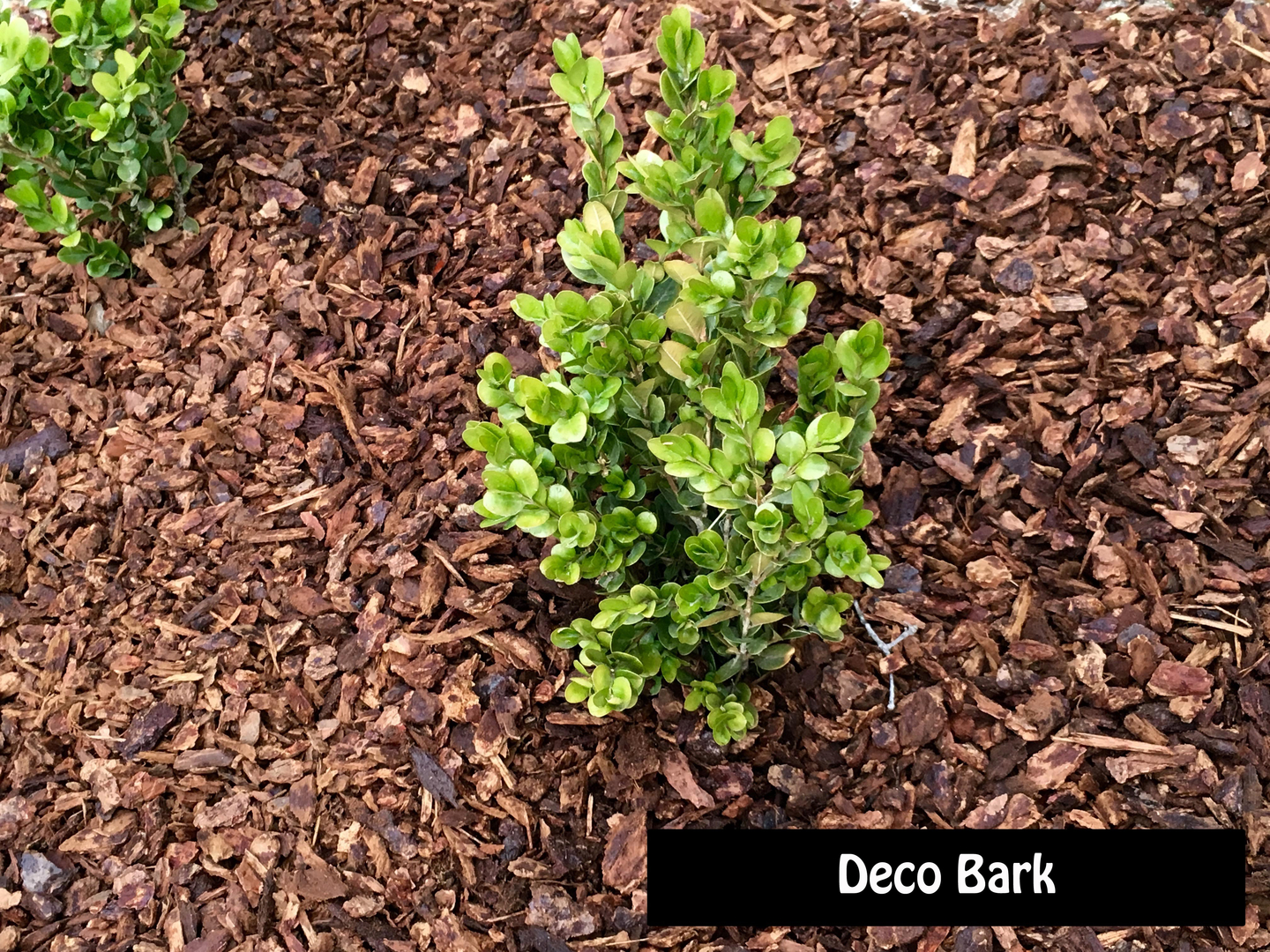 ground covers & mulch