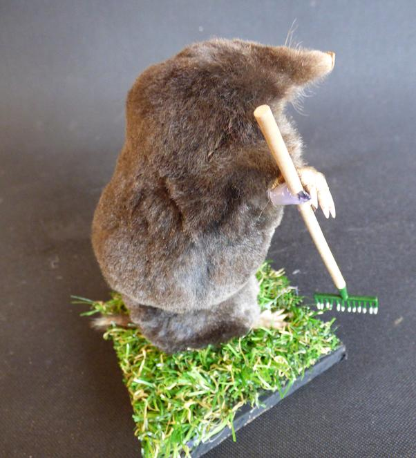Adrian Johnstone, professional Taxidermist since 1981. Supplier to private collectors, schools, museums, businesses, and the entertainment world. Taxidermy is highly collectible. A taxidermy stuffed Gardening Mole (22), in excellent condition.