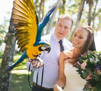 Baby Blue and Gold Macaw Sydney