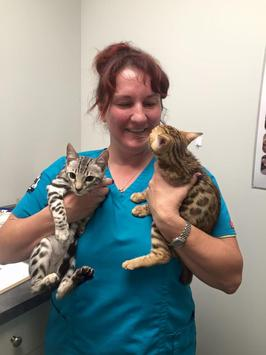 Dr. Ginger Langan with feline patients