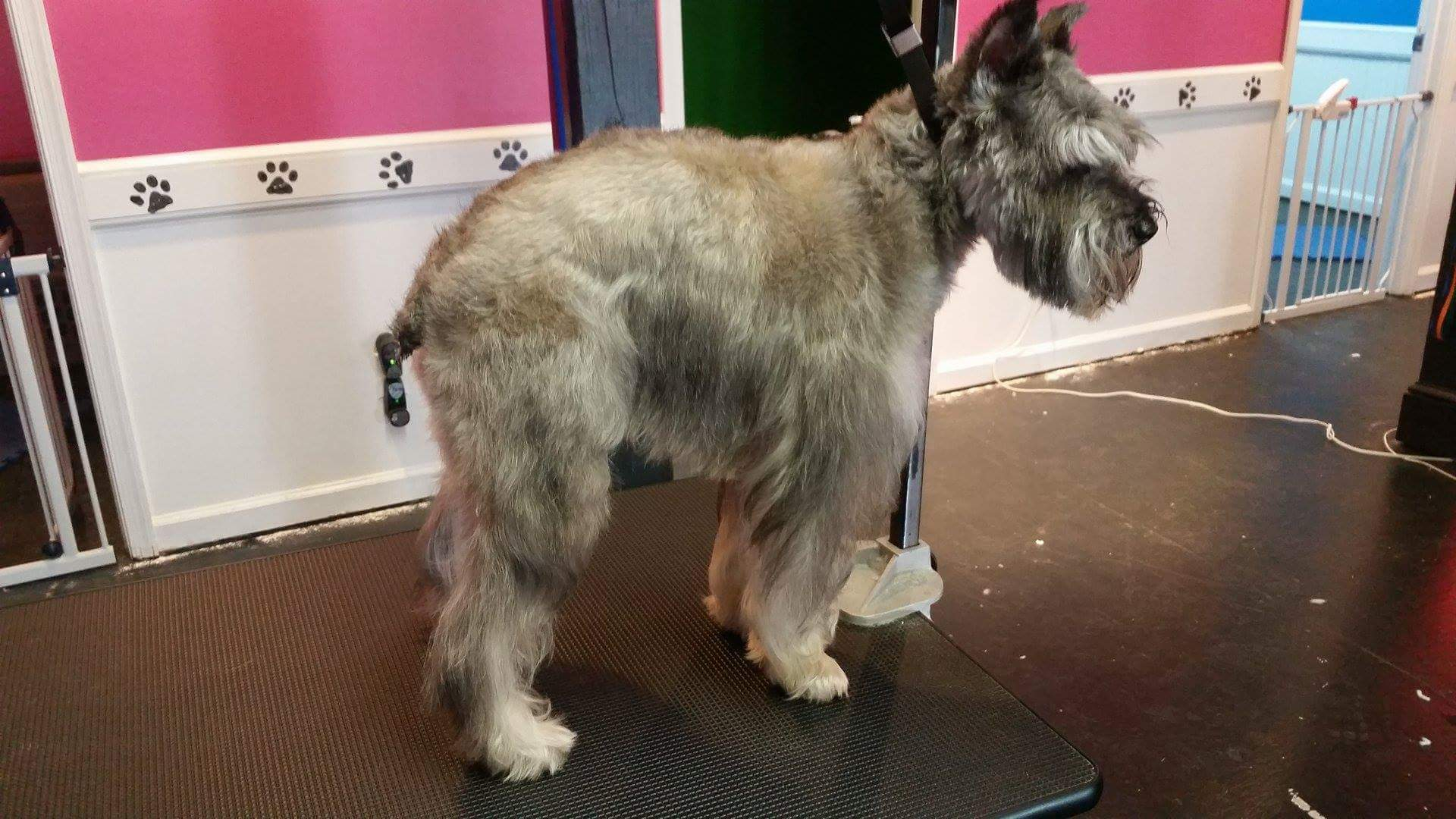 Grooming before after stress free grooming solutioingenieria Choice Image