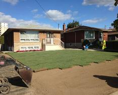 Sodding service sod installed in Oakville