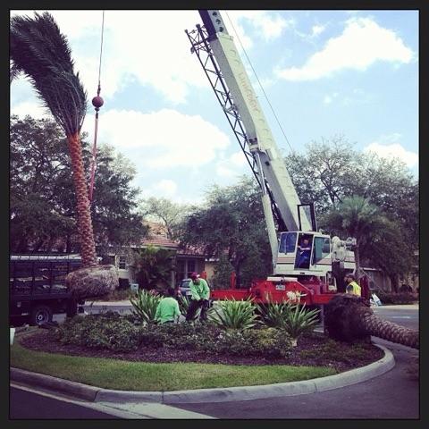 Lawn Mowing Lawn Care Buren Landscaping Design Inc Orlando Fl
