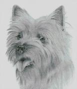 Cross Stitch Chart of a Cairn Terrier original artwork by Nick Clark