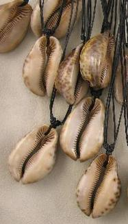 Cowrie shell on cotton cord