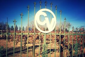 Chavez Vineyards