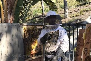 Escondido Bee Removal - Bee Keeper