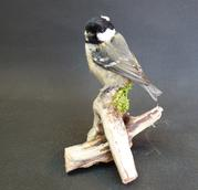 Adrian Johnstone, professional Taxidermist since 1981. Supplier to private collectors, schools, museums, businesses, and the entertainment world. Taxidermy is highly collectable. A taxidermy stuffed adult Coal Tit (9662), in excellent condition.