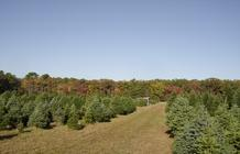 Christmas Trees For Sale Luke Newcomb Egg Harbor City Nj