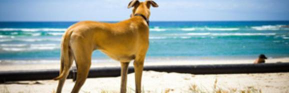 Aggressive Dog Training Virginia Beach