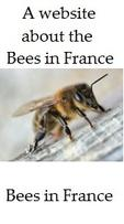 About-the-bees-of-France