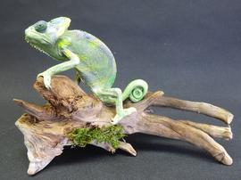 Adrian Johnstone, professional Taxidermist since 1981. Supplier to private collectors, schools, museums, businesses, and the entertainment world. Taxidermy is highly collectable. A taxidermy stuffed Chameleon (60) in excellent condition.