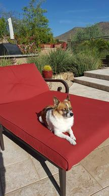 Pet Sitting Scottsdale