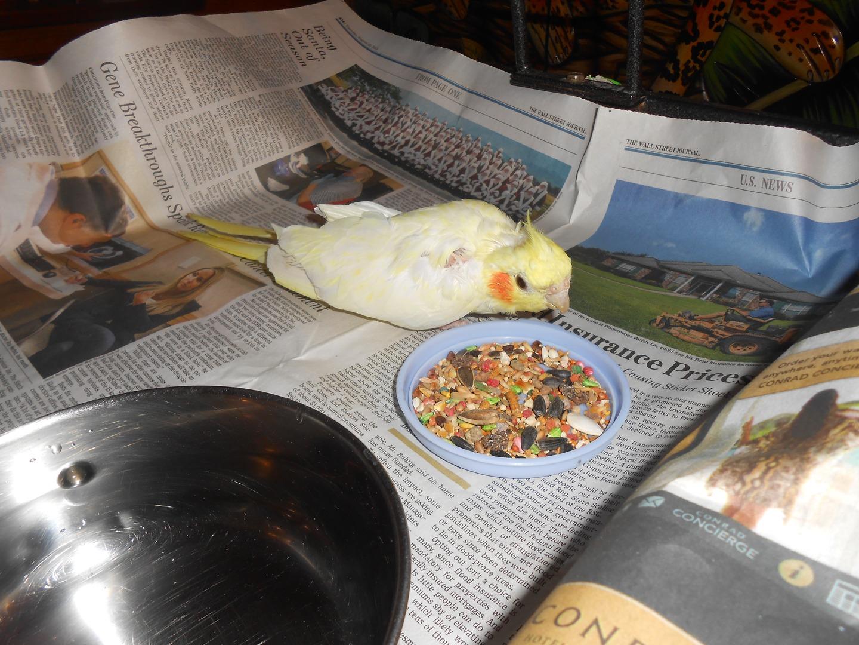 Parrot Haven | Sanctuary | Lindenhurst, NY