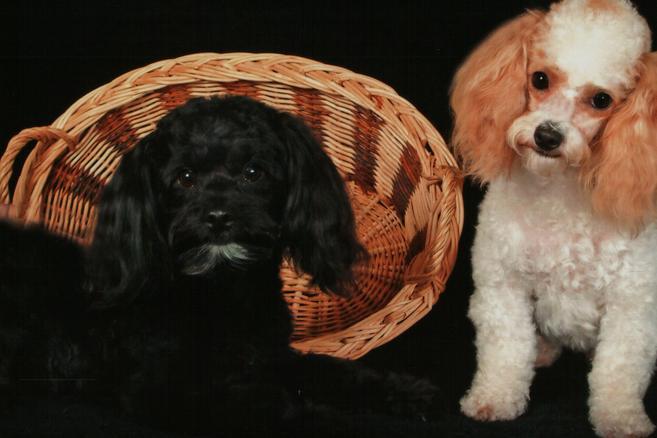 Dog Grooming Columbia Sc