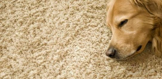 pet odor removal Paso Robles