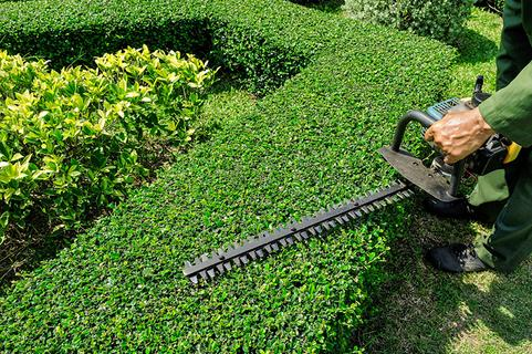Affordable Shrub Care Services in Omaha NE | Omaha Junk Disposal