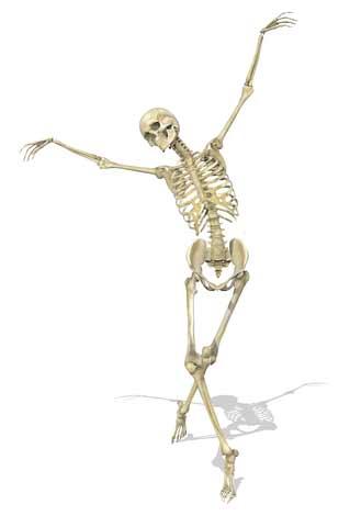 services, Skeleton