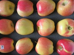 Pro.o_Organic Apples Ambrocia 5lb/bag 有机Ambrosia苹果5磅袋