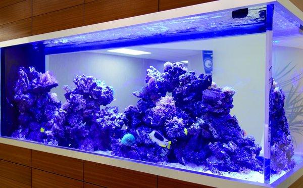120 gallon acrylic aquarium aquariumsource.com