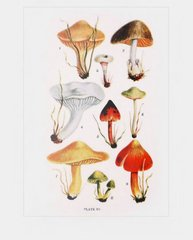 Gilled Mushrooms Postcard