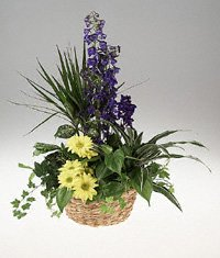 Basket Planter with Fresh Flowers