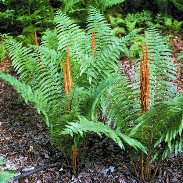 Wholesale Plants Long Island