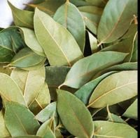 Pimento Leaves