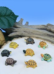 Mini Box Turtles     (12 PC SET)