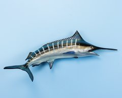 "Blue Marlin 22"" Fish Mount"