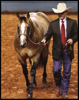 dual horse roping csr spark stallions