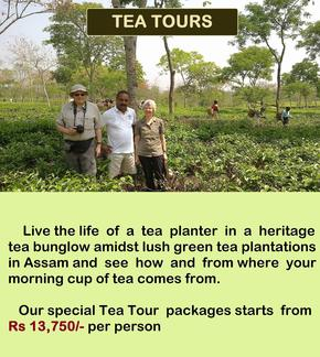 Tea Tour package for Northeast India