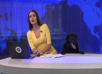 Dog's Surprise Appearance During Live News