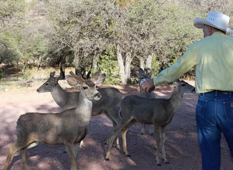 Jim Severns and mule deer near Old Spanish Trail Studio