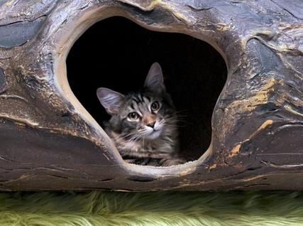 Cat Tunnel s