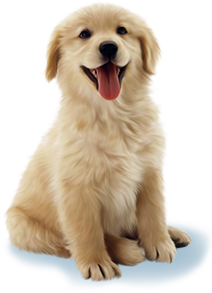 Canine Minds and Manner Dog Training - Calgary Dog Training