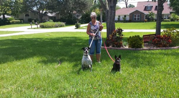 Dogs that have been receiving dog training in Melbourne, FL.
