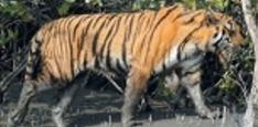 Details About The Sundarban National Park