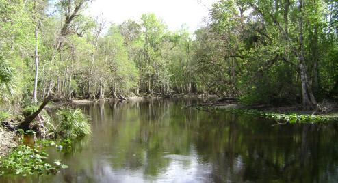 Florida Land Sale - Ocala National Forest Private Lots