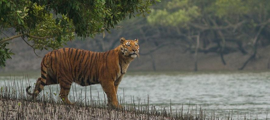 Sundarban Tour Package Sunderban National Park Jungle From Kolkata