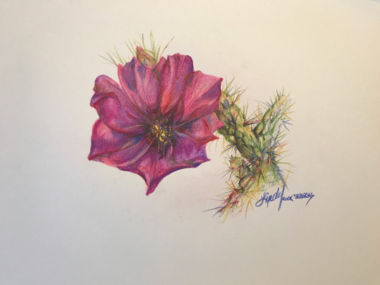 Cholla Bloom colored pencil drawing by Texas artist Lindy C Severns