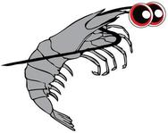 Sammie the shrimp BeachSeines.com logo drawing