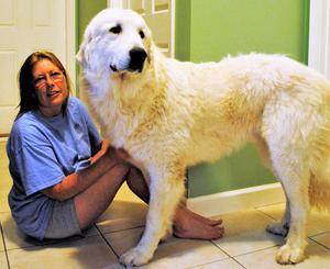 Wells Providence Great Pyrenees Missouri Breeder