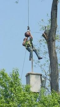 Tree Removal Lititz