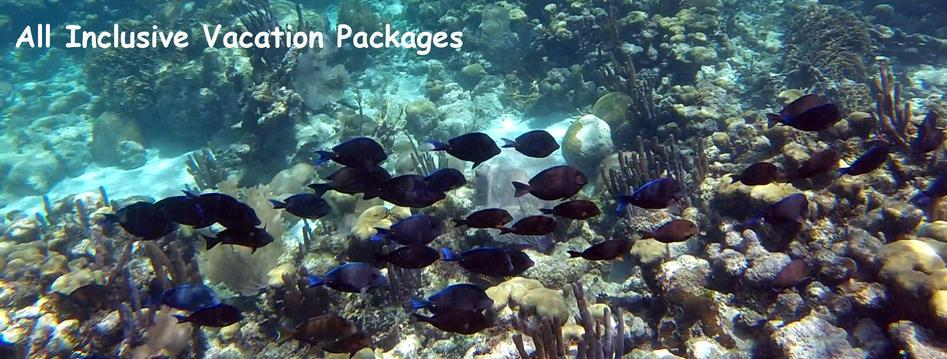 A school of blue tang pass through coral gardens at the Belize barrier reef. All inclusive vacation packages available.