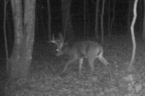 kentucky deer