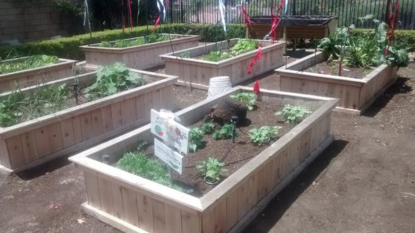 cedar-style 2 -custom raised gardens - raised garden bed design