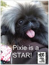 Pixie is a STAR at the Canine Film Festival at Hotel Indigo...www.CanineFilmFestival.com