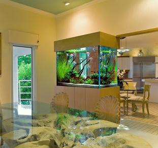 custom aquariums, okauchee, mequon, modern aquarium,