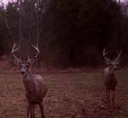 kentucky bucks